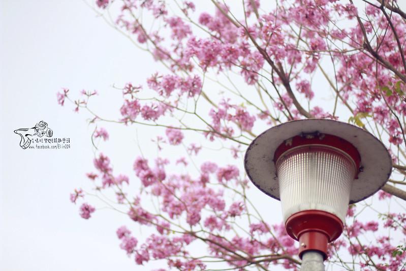花 (2)
