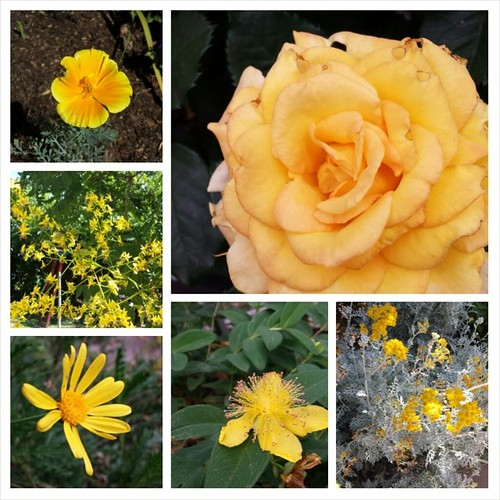 Summer yellows #summer #flowers #gardening #yellow