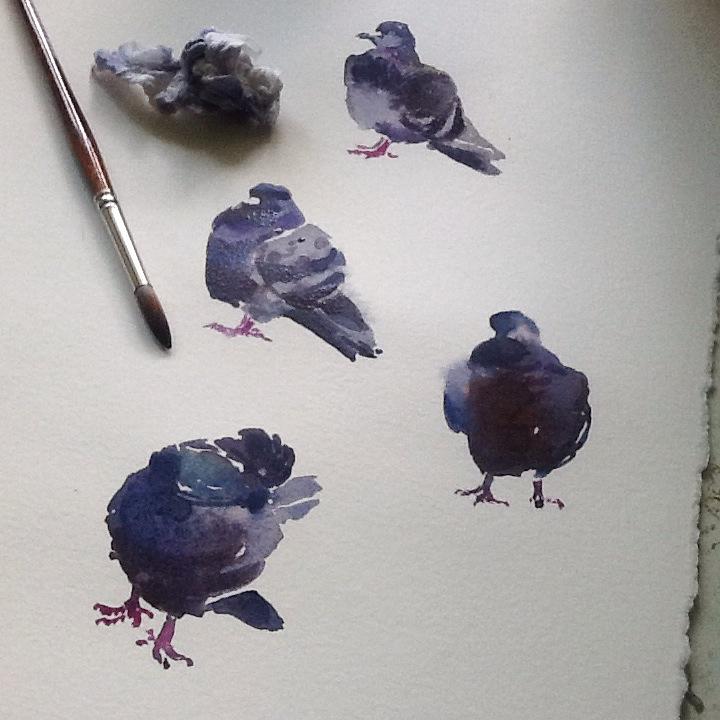 WC pigeons