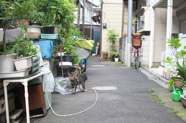 東京路地裏散歩 谷中・千駄木 路地裏のネコ 2014年7月20日