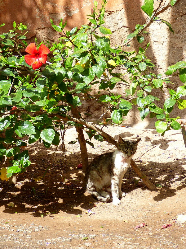 cat in the courtyard, Marrakesh