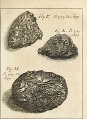 "Image from page 854 of ""Miscellanea curiosa, sive, Ephemeridum medico-physicarum Germanicarum"" (1700)"