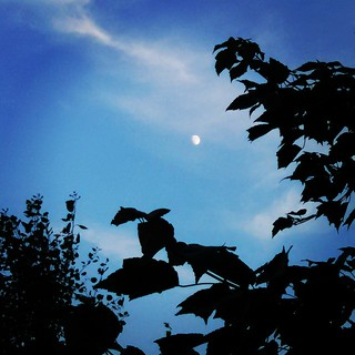 Hello, moon! #summer #sky #moon #clouds #trees #newhampshire #evening