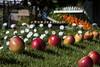 Le jardin du oui
