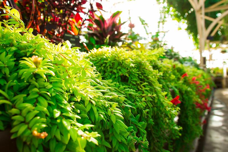 Botanical Conservatory_16