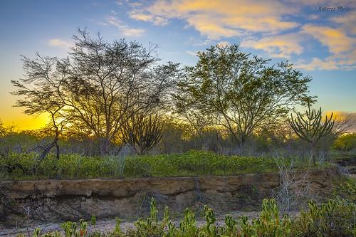 landscape paisagem rqserra