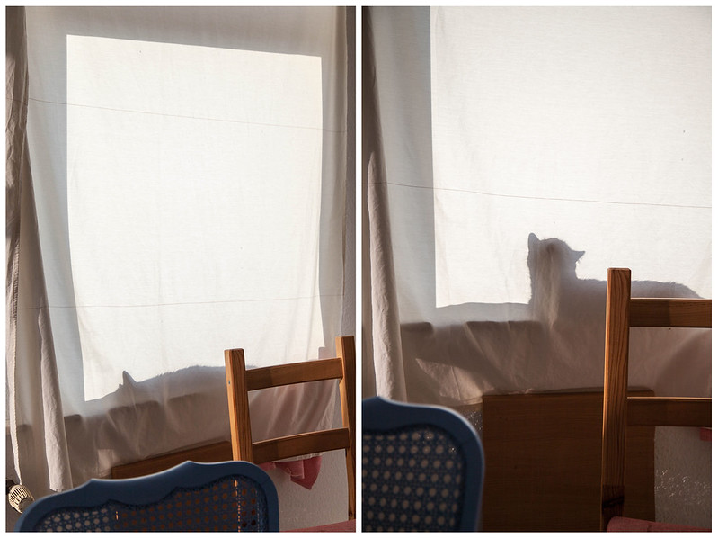 14/8/14 Shadow Of The Cat