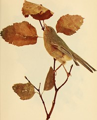 "Image from page 222 of ""Birds and nature"" (1900)"