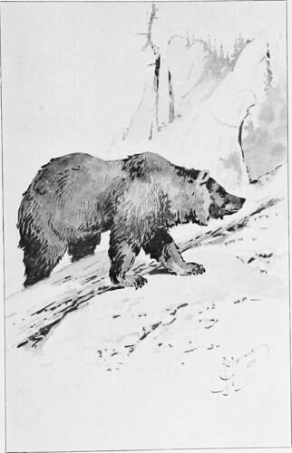 "Image from page 282 of ""True bear stories"" (1900)"