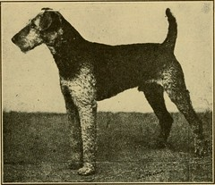 """Image from page 78 of """"The Airedale terrier standard simplified"""" (1921)"""
