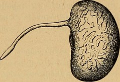 "Image from page 109 of ""Archives de parasitologie"" (1902)"