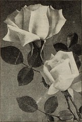 "Image from page 187 of ""Dreer's garden book 1915"" (1915)"