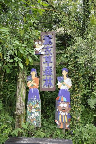 新竹石尖薰衣草森林 (2)