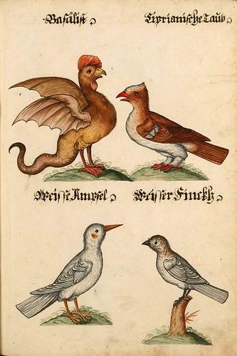 010-Aquarelle von Säugetieren…- e-manuscripta-Bibliothèque électronique suisse