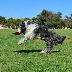 Approach for a landing after a successful catch. Incomiiiiiiiiing! :-D
