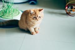 Opal, the kitten