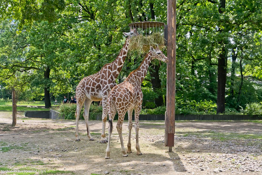 Берлин_зоопарк-36
