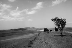 Road to David Gareja