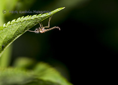 Un-ID-Insect