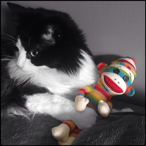 #fmsphotoaday September 2 - Stripes #catsofinstagram #tuxedocats