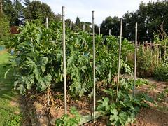 """Particolare delle piante: si noti il """"tronco"""" degli """"alberi"""""""