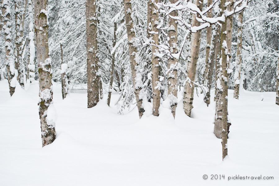 Alaska after a snowfall