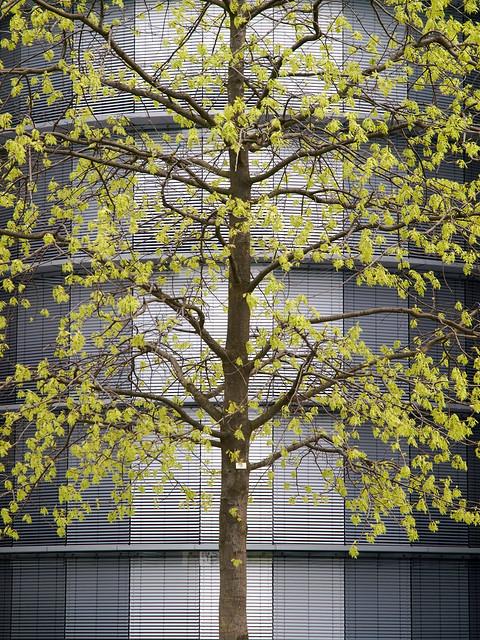 Berlin architecture - Cour intérieur - Paul-Löbe-Haus - L'arbre