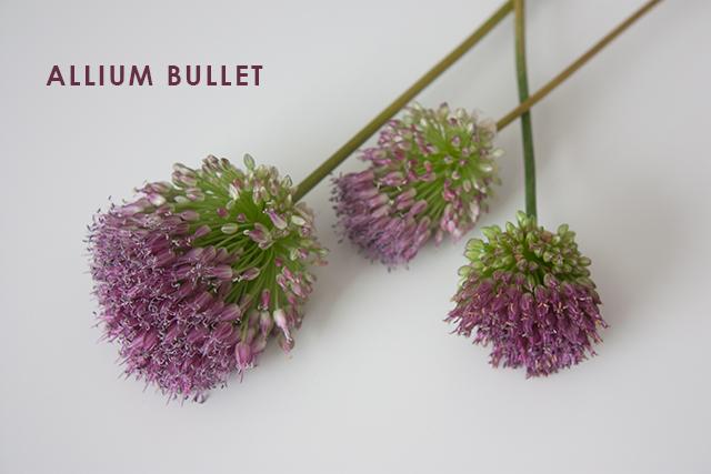 allium-bullet-1