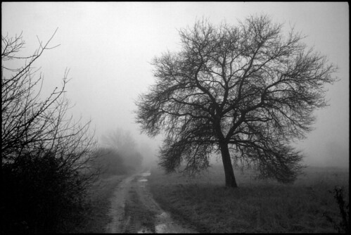morning trees winter reflection tree film nature fog canon landscape 50mm blackwhite pentax takumar kodak foggy croatia m42 spotmatic t400cn manualfocus canoscan spf twop asahipentax screwmount 125asa c41 chromogenic colornegative 2013 vuescan 8800f pullprocess canoscan8800f smctakumar11450 camera:brand=pentax lens:mount=m42 camera:type=slr film:brand=kodak justpentax film:format=135 kodakprofessionalt400cn location:country=croatia lens:focallength=50mm pentaxart spotmaticspf film:process=c41 film:speed=400 lens:brand=asahipentax winter2013 desinec honeywellpentaxspotmaticspf lens:maxaperture=14 camera:brand=asahipentax camera:mount=m42 camera:model=spotmaticspf film:model=t400cn lens:brand=pentax camera:brand=honeywellpentax camera:format=135 lens:model=smctakumar1450 lens:format=135 film:ei=125