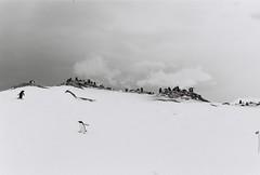 Antarctica Lost Film (11)