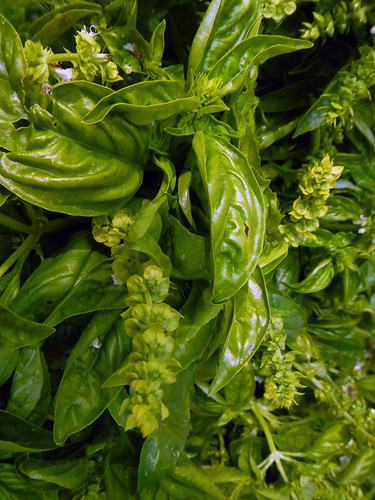 Basil at the Portland Farmer's Market