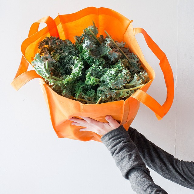 Picked a bunch of kale from the garden, what's your favorite kale recipe?  Help me out!  #kale #recipe #foodblog #food #blogger #vegetablegarden #rooftop #NYC #Brooklyn #vegetables #healthyeating #garden #gardening #urbanfarming #urbangarden #containergar
