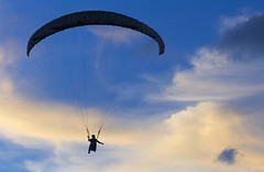 paraglider              IMG_2123bs