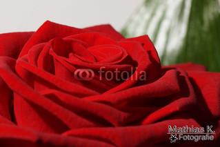 Farben der Liebe