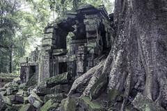 Ta Prohm 塔布蘢寺 (樹廟)