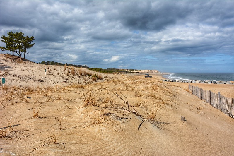 Sand dunes, Cape Henlopen State Park, Delaware