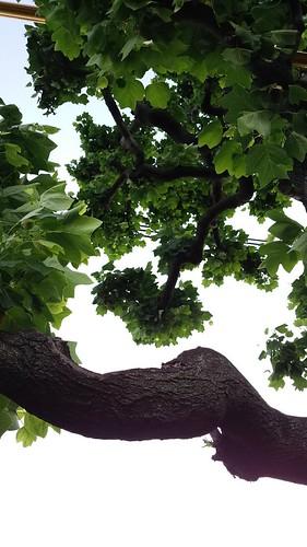 枝葉と電線