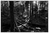 Forest, Vosges by LtDrogo