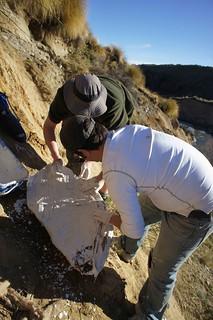 替魚類化石打石膏,準備帶回實驗室。這件標本的採集挺有趣的,是在陡峭的山壁上。白色衣服為Bobby(實驗室另一名博士生),綠色衣服為Marcus(實驗室一名大學部學生,這件魚類化石就是他專題論文的一部分)。作者攝於紐西蘭南島。