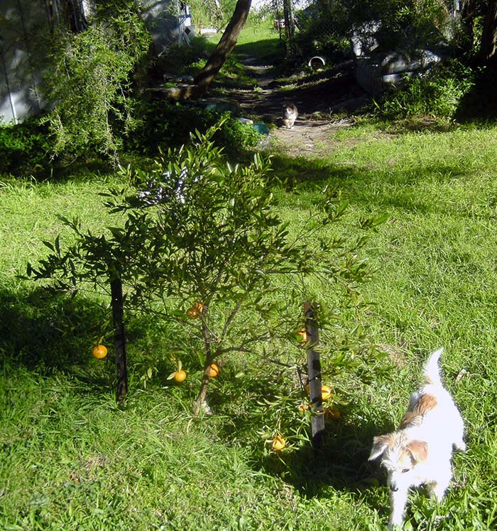 140704-Peggy's bush