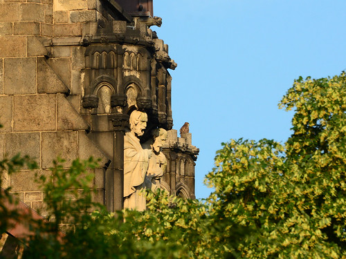 Cathedral Hawk Fledgling (2610)
