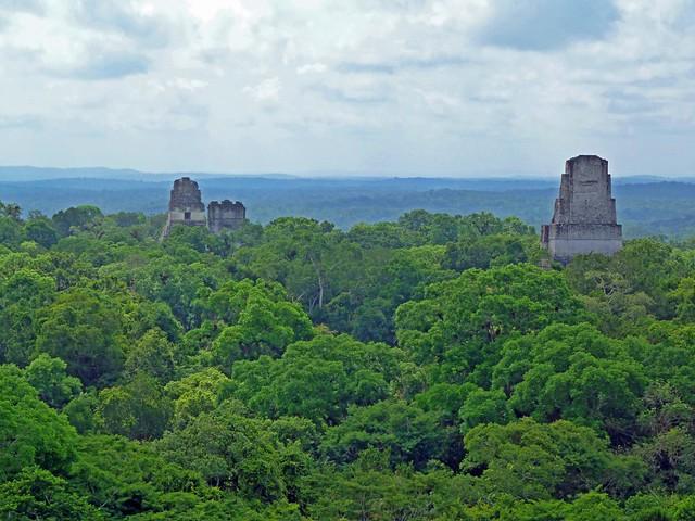 Tikal y la selva del Petén desde lo alto del Templo IV