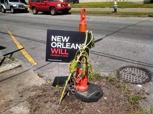 New Orleans wilt
