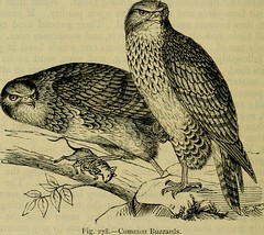 """Image from page 611 of """"Reptiles and birds : a popular account of their various orders, with a description of the habits and economy of the most interesting"""" (1883)"""