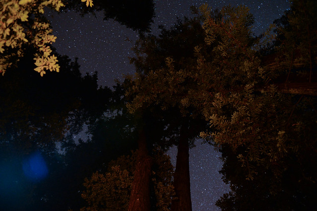 stars in spaces between trees