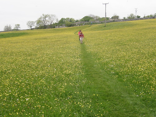 The Beach Funsters crossing a buttercup field