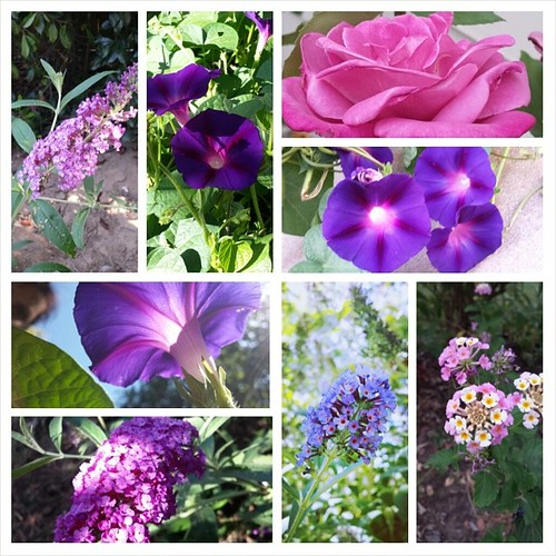 #summer #purple #flowers #gardening