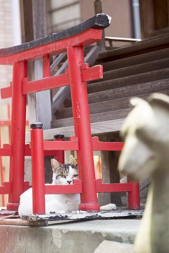 Kosuge Inari Jinjya with cat