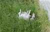 suzie_rolling_in_tall_grass-20140731-100