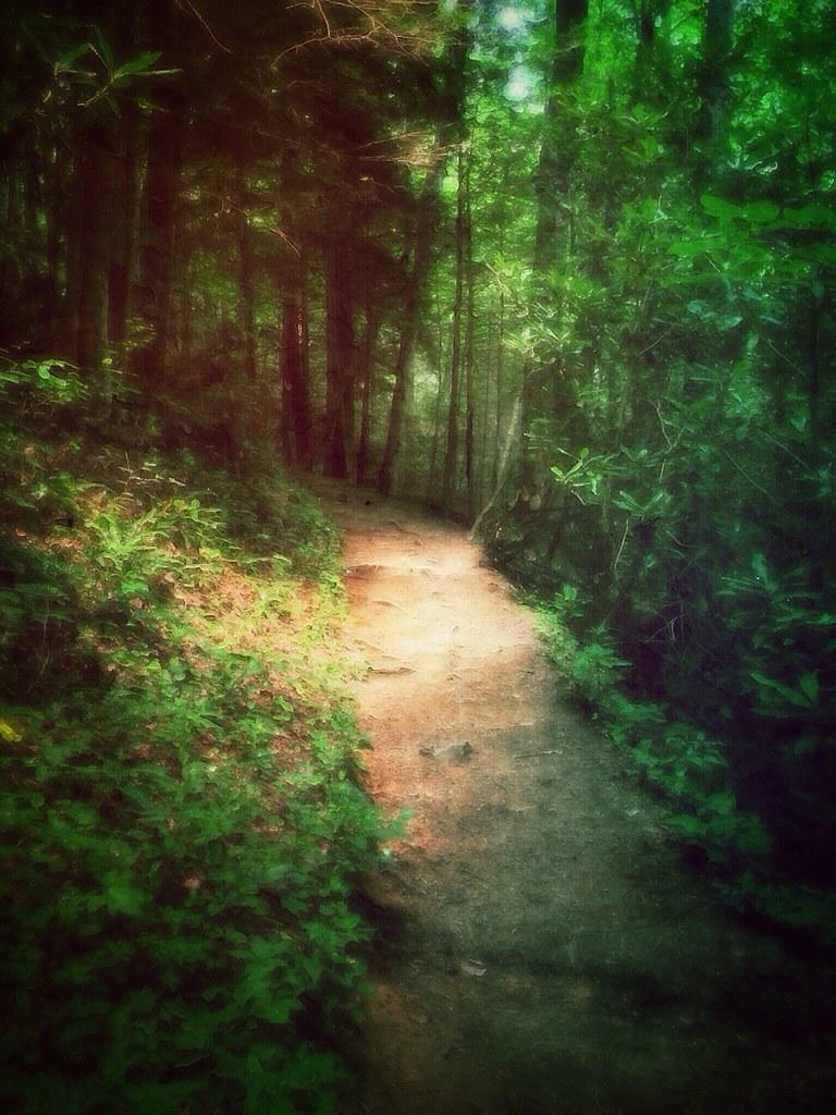 Hike to Hen Wallow Falls